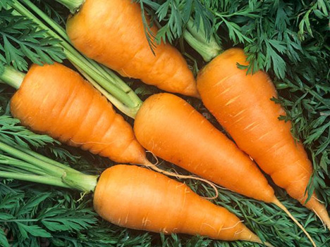 Carrots, Red Cored Chantenay variety (Daucus carota).