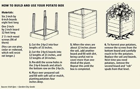 gardening_Potatoes